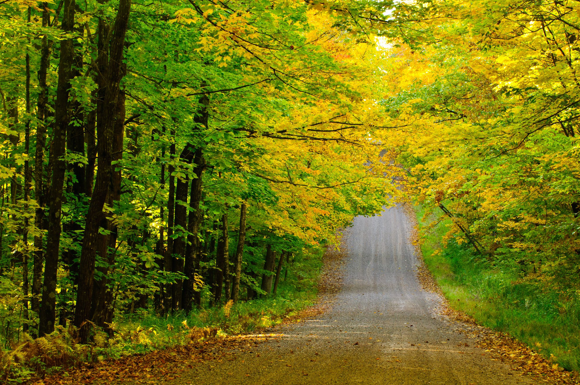 fall road in blue hills rusk county wi