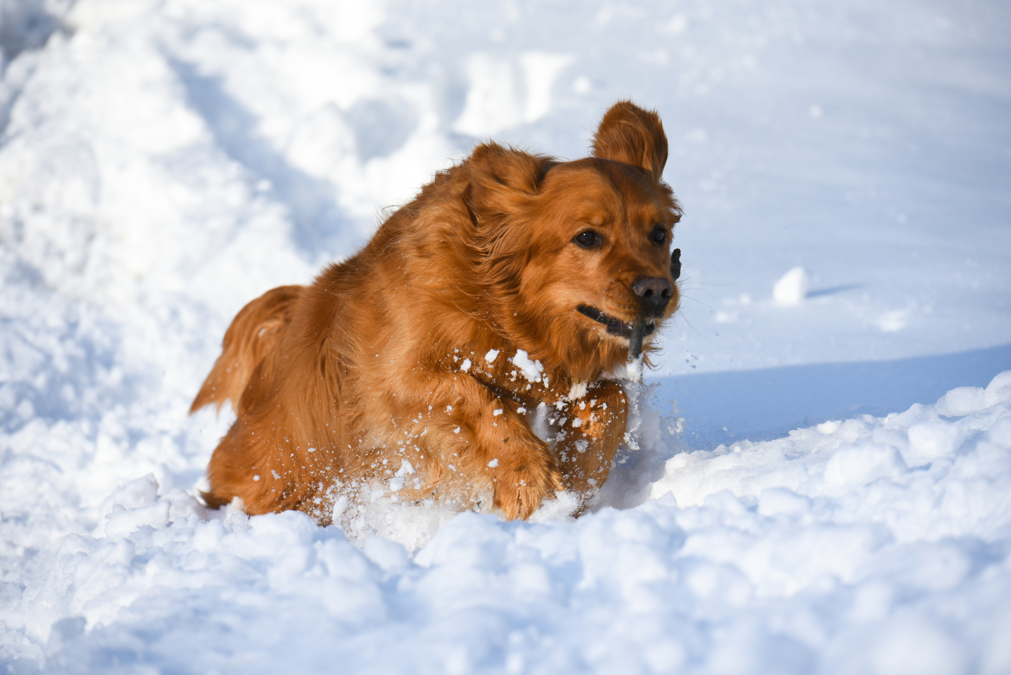 dog running in snow in blue hills rusk county wisconsin